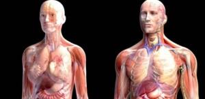 Organisme humain