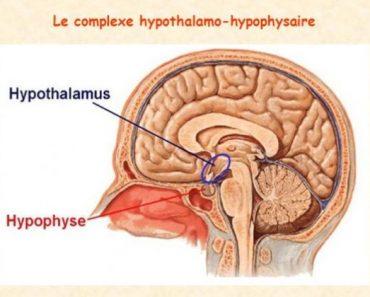 Hypophysaire