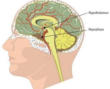 Hypothalamo-hypophysaire